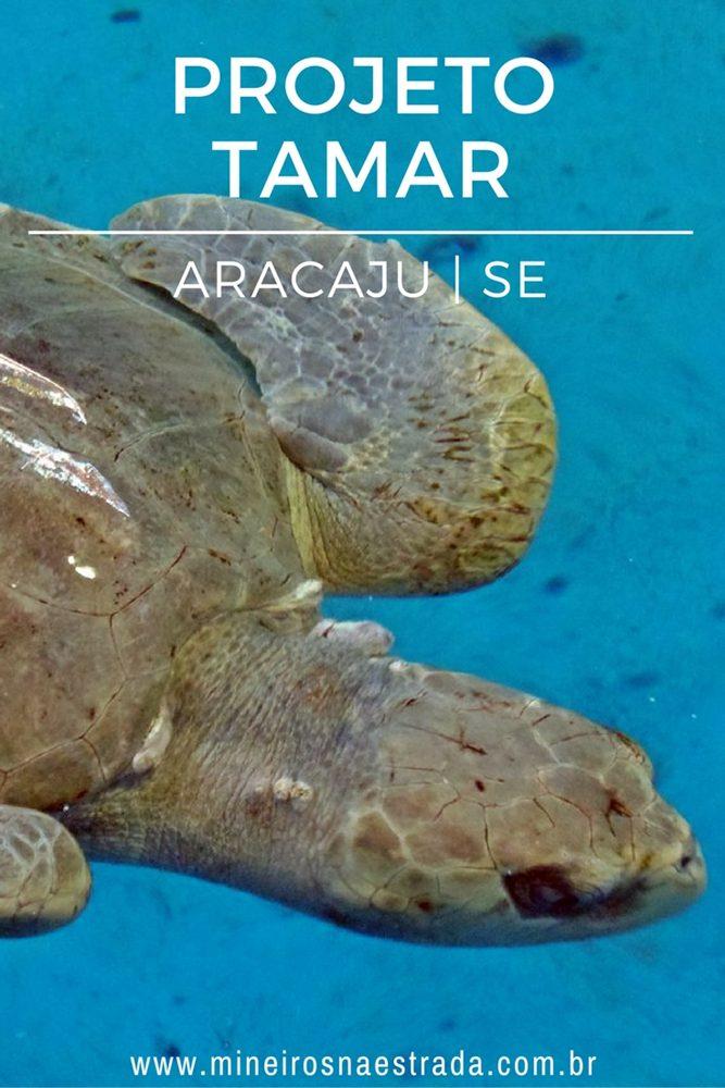 O Projeto Tamar de Aracaju é uma das atrações da orla da praia de Atalaia. Além das tartarugas, há moreias, arraias, tubarões e dezenas de outras espécies marítimas.