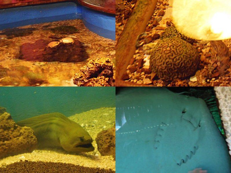 Caranguejo, coral, moreia e arraia no Projeto Tamar de Aracaju