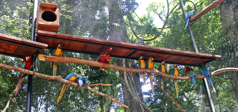 Parque das Aves, um parque que resgata animais vítimas de maus tratos e do tráfego. Fica em Foz do Iguaçu, a poucos metros da entrada do Parque Nacional do Iguaçu.