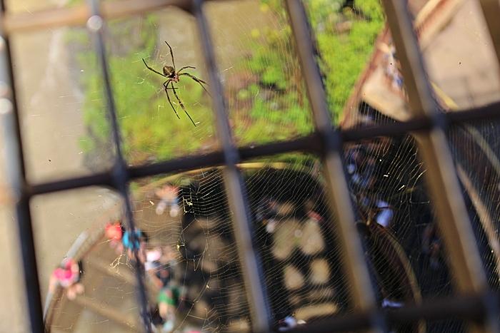 Do alto do mirante a gente vê o pessoal lá embaixo... e aranhas, muitas aranhas!