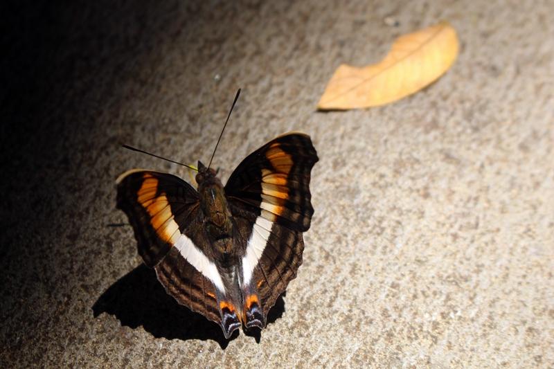 Dica extra: ande olhando para o chão. Pode haver borboletas!