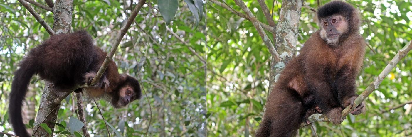 Ainda tivemos sorte de ver macacos na volta da trilha