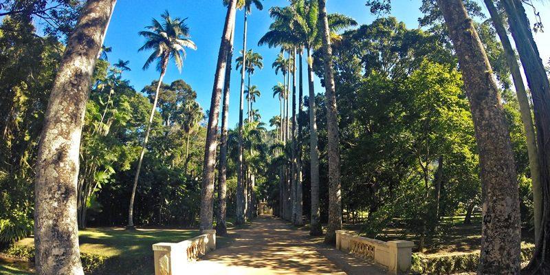 O Jardim Botânico do Rio de Janeiro