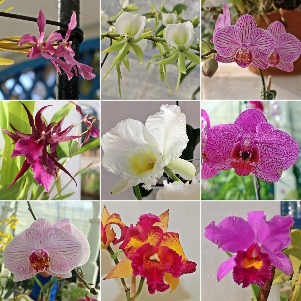 Algumas orquídeas