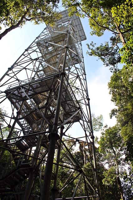 torre musa
