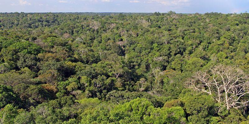 Museu da Amazônia: caminhando pela Floresta em Manaus
