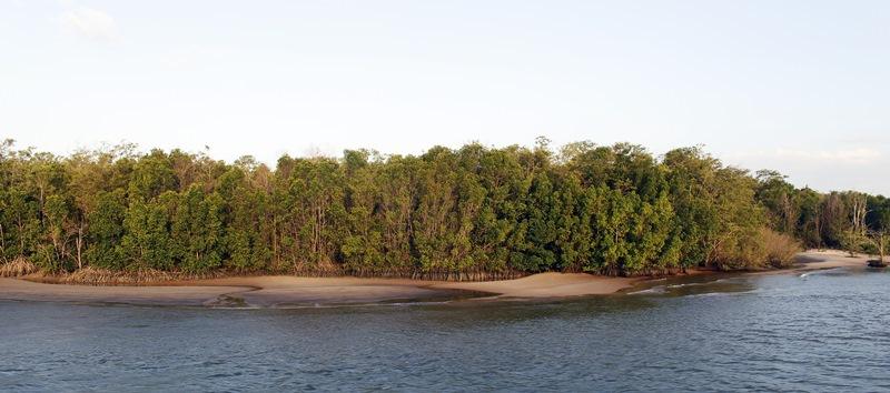 ilha do marajo paisagem