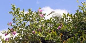 Mangal das Garças: programa grátis em Belém