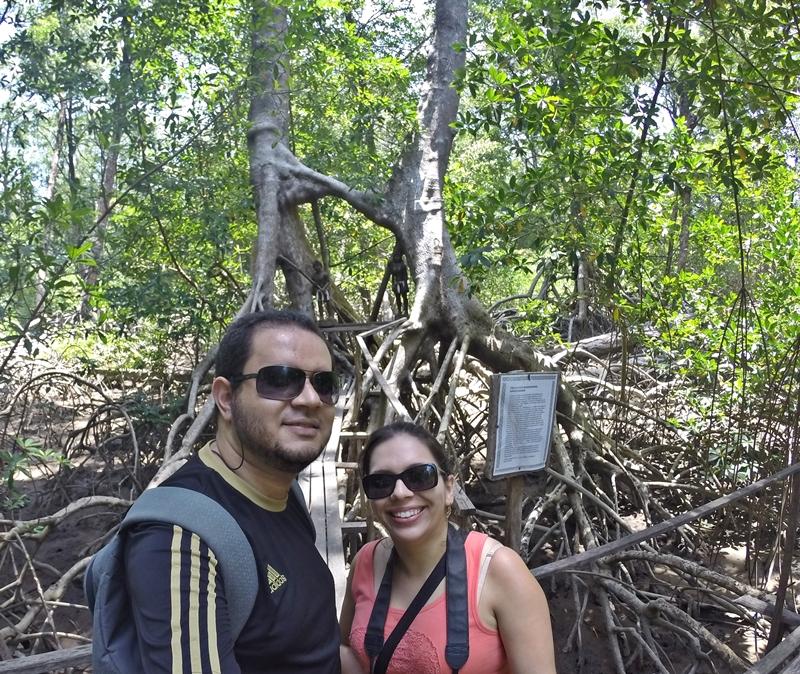 manguezal árvores unidas
