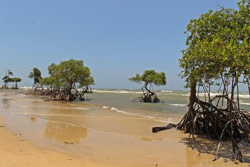 praia do goiabal marajó