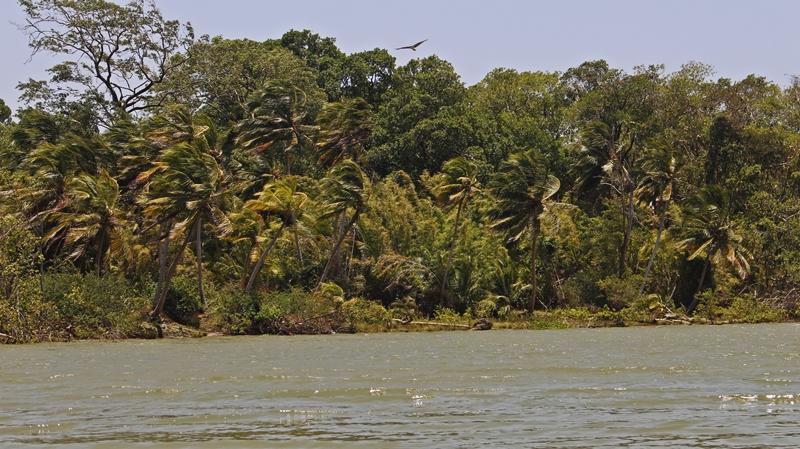 ilha do marajo fazenda sao jeronimo