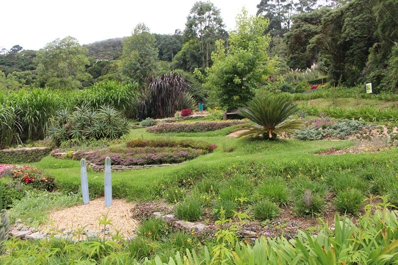amantikir jardim 2