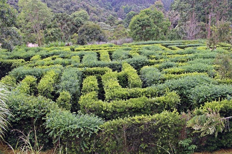 amantikir labirinto classico