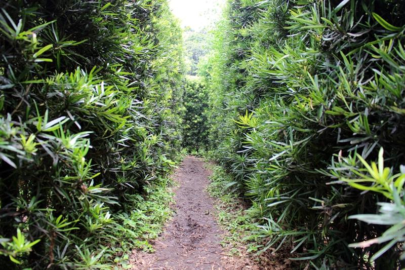 labirinto classico amantikir