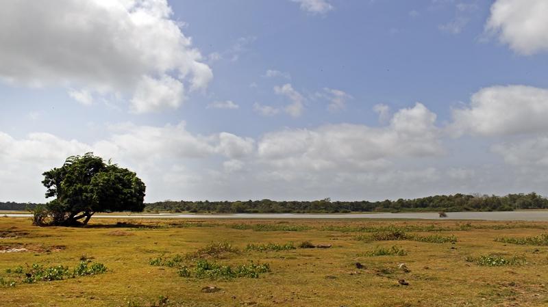 fazenda bom jesus ilha do marajo (13)