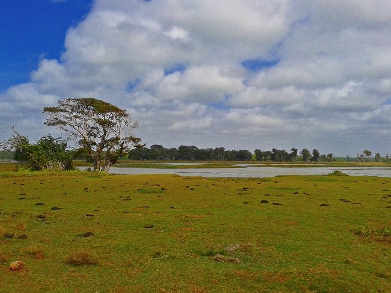 fazenda bom jesus ilha do marajo (26)