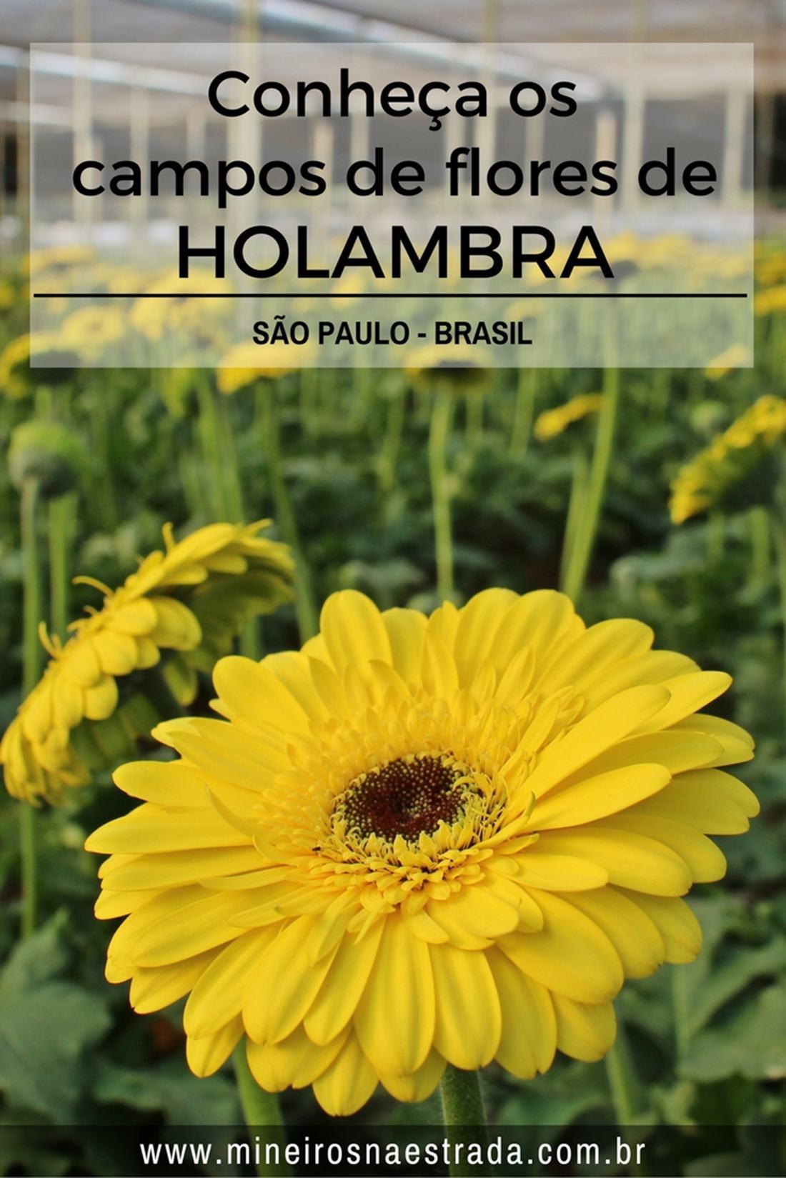 Como é o city tour por Holambra, passando por campos de gérberas, crisântemos e lisiantos, além de outros pontos de interesse na cidade mais importante do Brasil em produção de flores e plantas ornamentais.