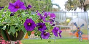 Conheça a Expoflora, o evento mais florido do Brasil