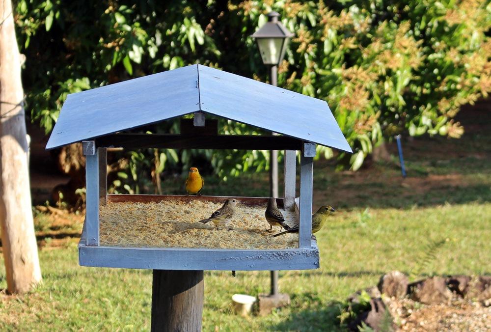 Pássaros na Pousada Solar dos Montes, localizada no município de Santana dos Montes, a 130 quilômetros de Belo Horizonte, em Minas Gerais. Ótima opção de descanso para casais e famílias.