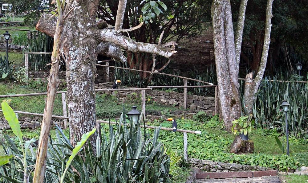 Tucanos na Pousada Solar dos Montes, localizada no município de Santana dos Montes, a 130 quilômetros de Belo Horizonte, em Minas Gerais. Ótima opção de descanso para casais e famílias.