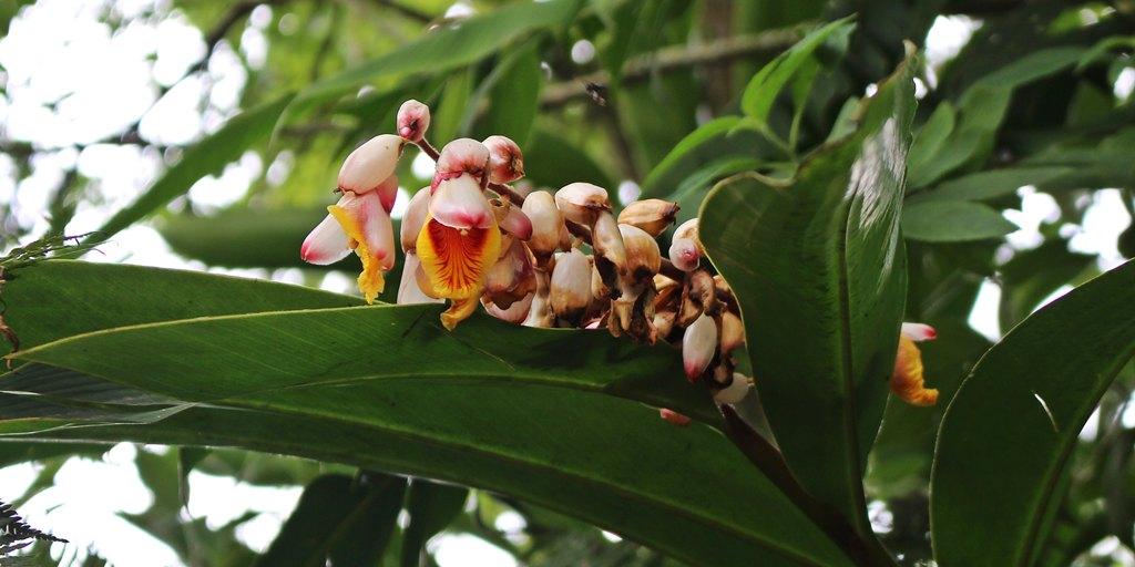 Flores da Fazenda Santana Marina, em Minas Gerais.
