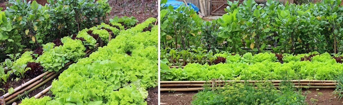 Horta orgânica da Fazenda Santa Marina, em Santana dos Montes.