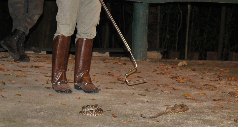 Monitor apresenta serpente no evento Lua Cheia no Museu, que acontece entre abril e setembro no Museu de História Natural da UFMG