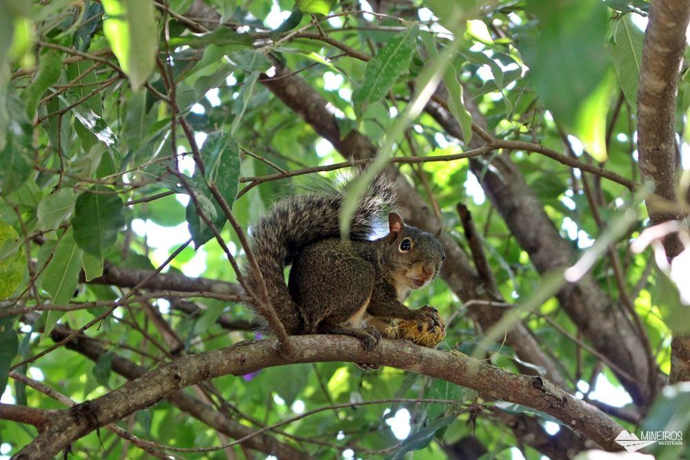 Esquilo no Inhotim.