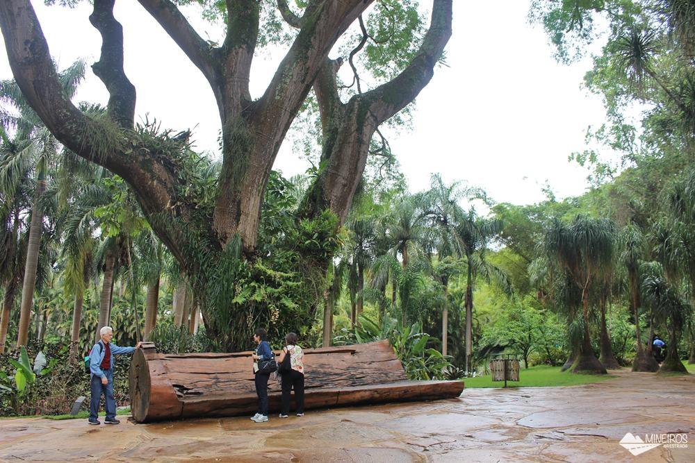 Tamboril, no Inhotim, em Brumadinho, Minas Gerais.