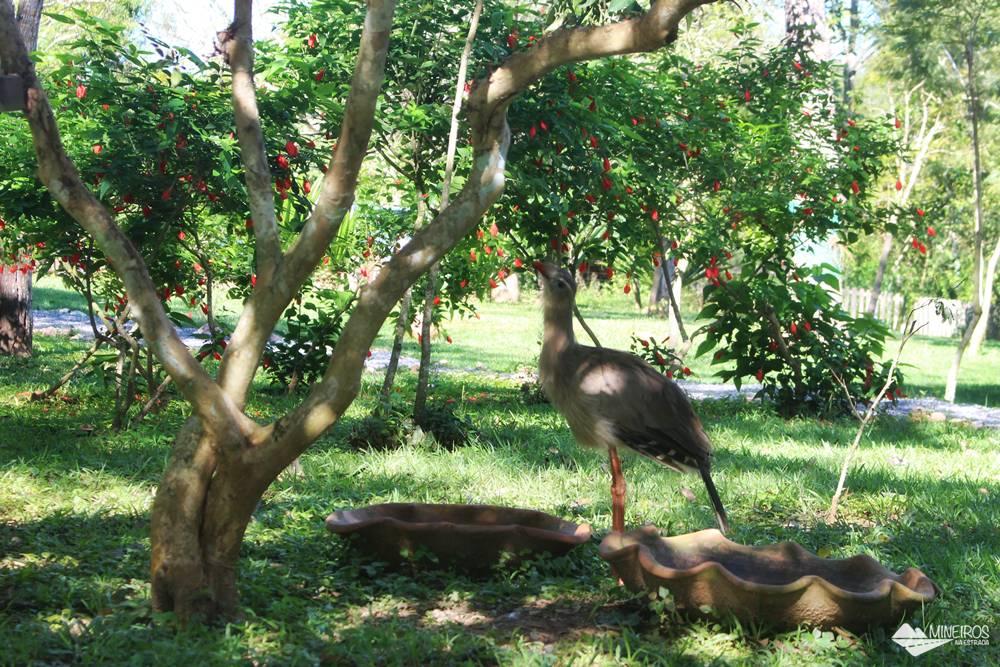 Seriemas da Estância Mimosa, propriedade particular aberta ao ecoturismo, em Bonito.
