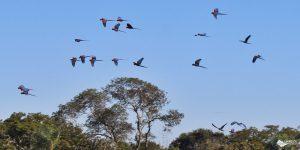 Buraco das Araras: passeio contemplativo em Bonito
