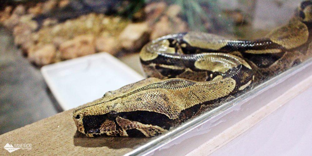 O Projeto Jiboia fica em Bonito (MS) e é uma ótima maneira de acabar com o medo, muitas vezes infundado, de cobras!