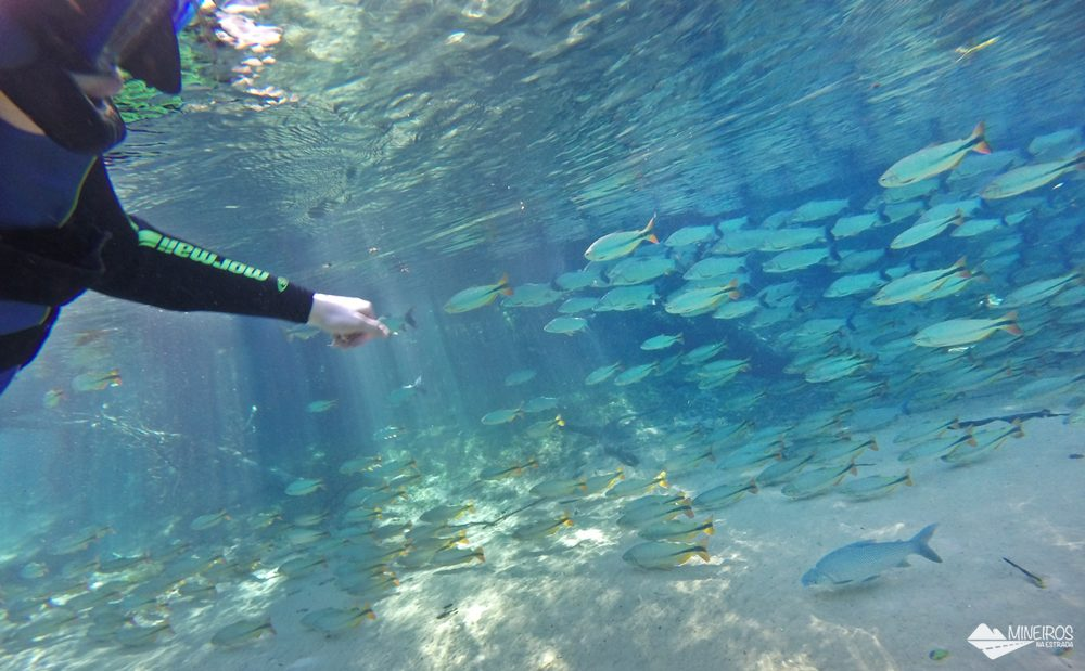 A flutuação no Recanto Ecológico Rio da Prata é a mais extensa de Bonito, no Mato Grosso do Sul. A água tem tempertarura agradável e é bem transparente.