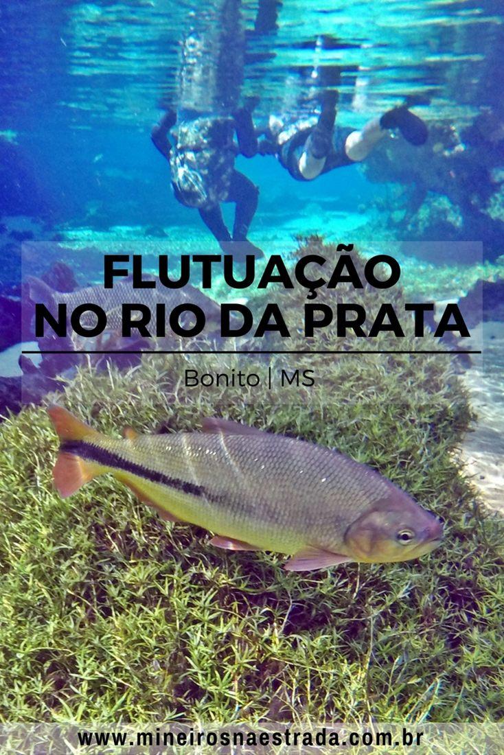 A flutuação no Recanto Ecológico Rio da Prata é a mais extensa de Bonito, no Mato Grosso do Sul. A água tem tempertarura agradável e é bem transparente. Bonito é um dos principais destinos de ecoturismo do Brasil.