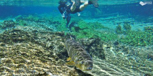 Bonito: Flutuação no Recanto Ecológico Rio da Prata