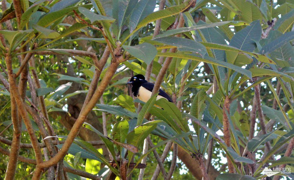 Pássaro visto durante a trilha para fazer flutuação no Recanto Ecológico Rio da Prata.