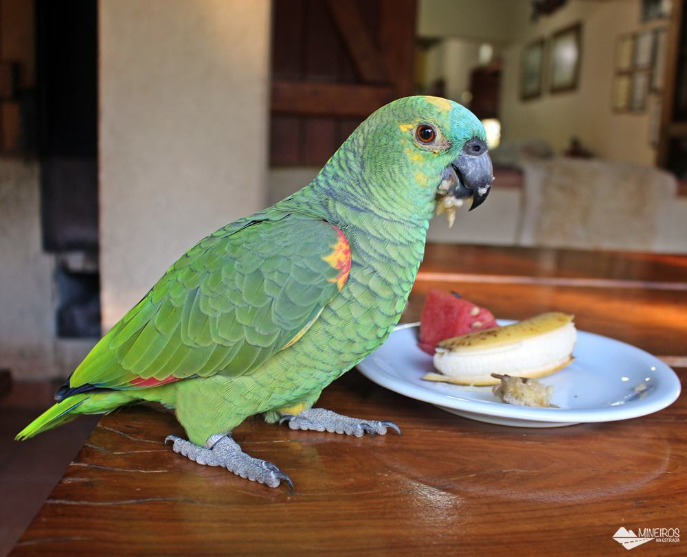 Papagaios ficam soltos no Recanto Ecológico Rio da Prata, em Bonito (MS).