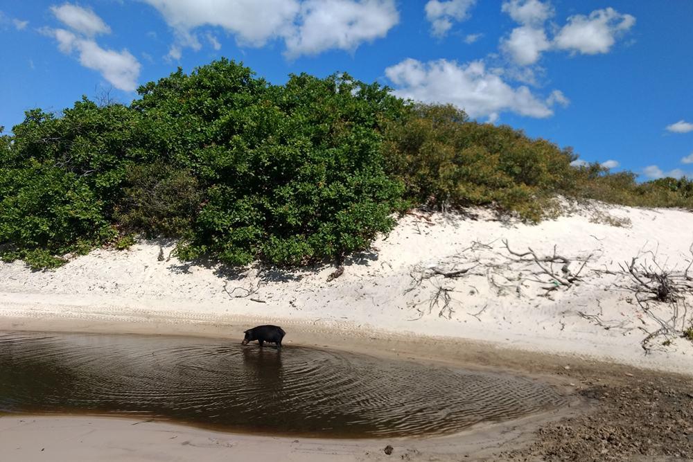 Santo Amaro é uma das cidades que tem o Parque Nacional dos Lençóis Maranhenses em seu território.