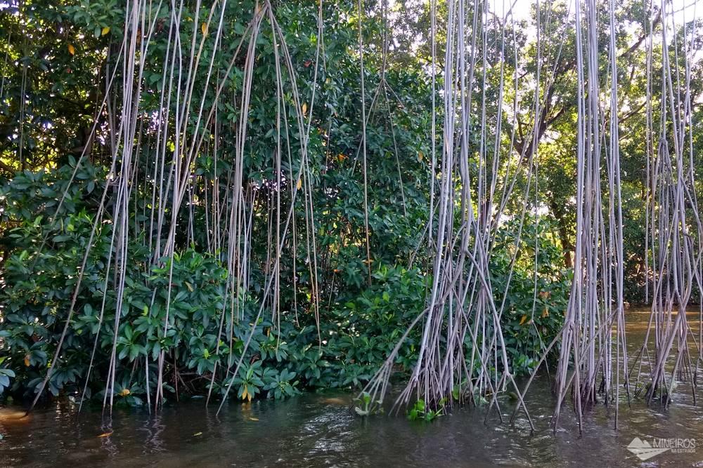 Como é o passeio de lancha voadeira pelo Rio Preguiças, passando por Vassouras, Mandacaru e Caburé, região dos Pequenos Lençóis Maranhenses.