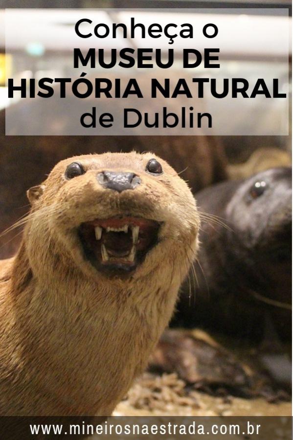 """O Museu de História Natural é um dos quatro museus que integram o """"National Museum of Ireland"""", ou Museu Nacional da Irlanda. A entrada é gratuita."""
