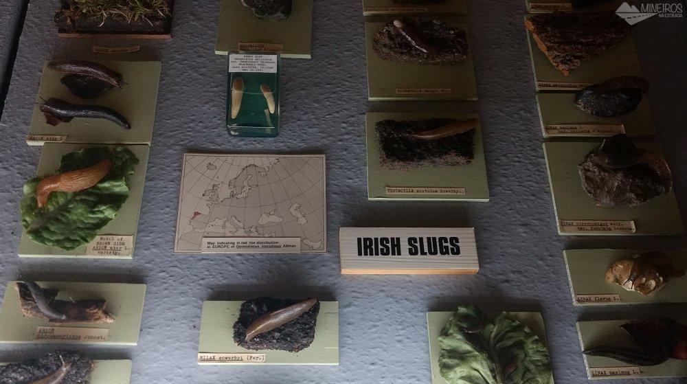 lesmas irlandesas - museu de historia natural de dublin