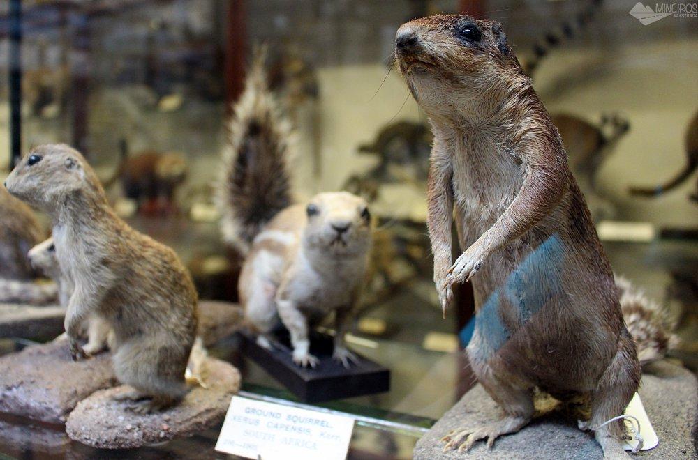 Museu de História Natural, Irlanda