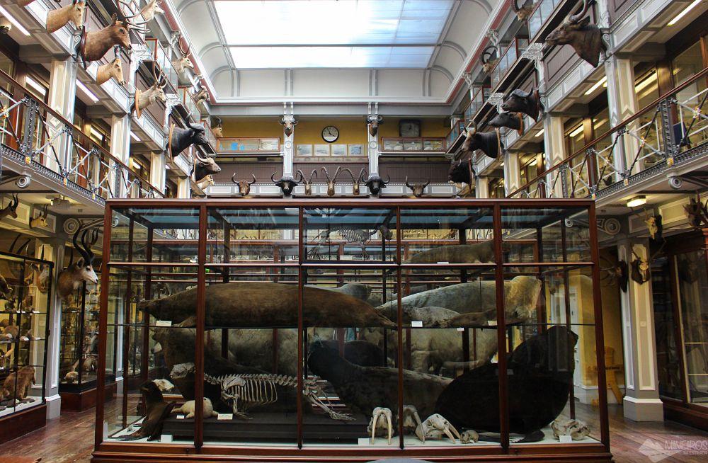 Museu de História Natural de Dublin, na Irlanda