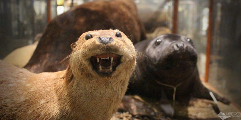Conheça o Museu Nacional de História Natural da Irlanda, em Dublin
