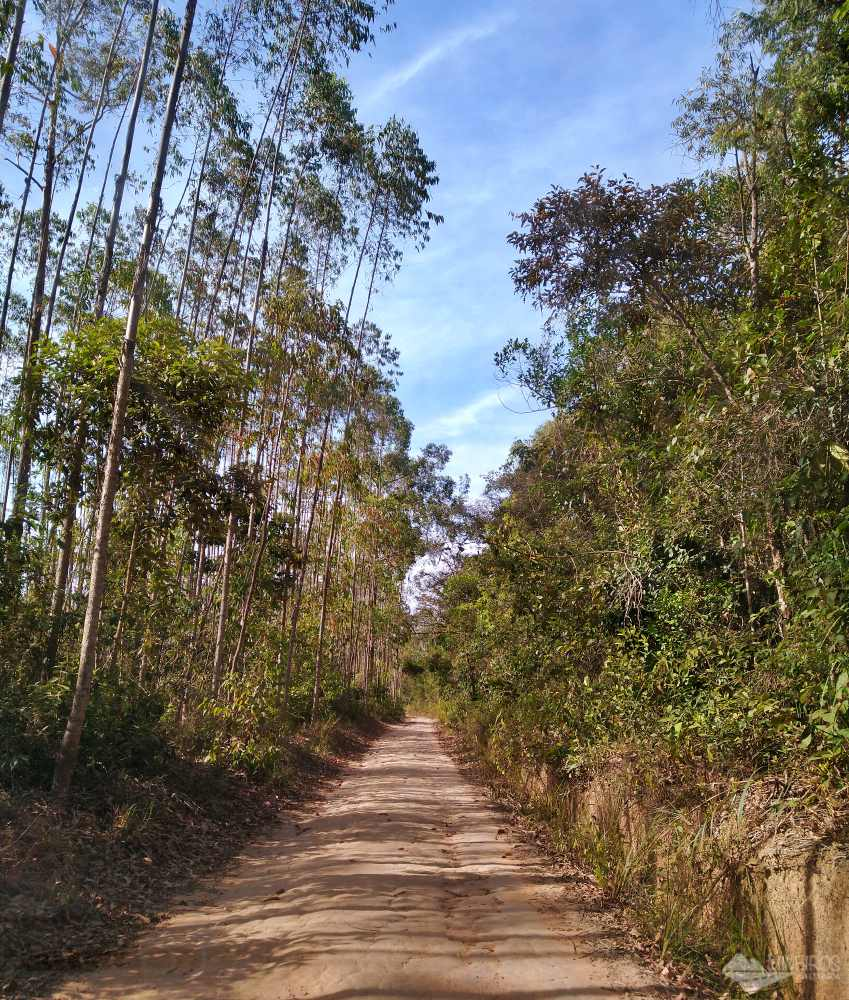 Estrada Real entre Prados e Lagoa Dourada