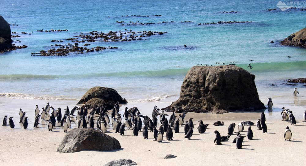 Boulder's Beach, a praia dos pinguins, na África do Sul