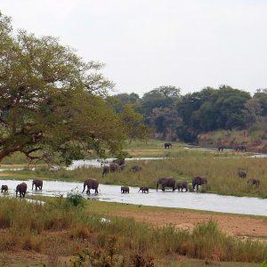Como foi fazer safári por conta própria no Kruger Park por 4 dias – Dia 1