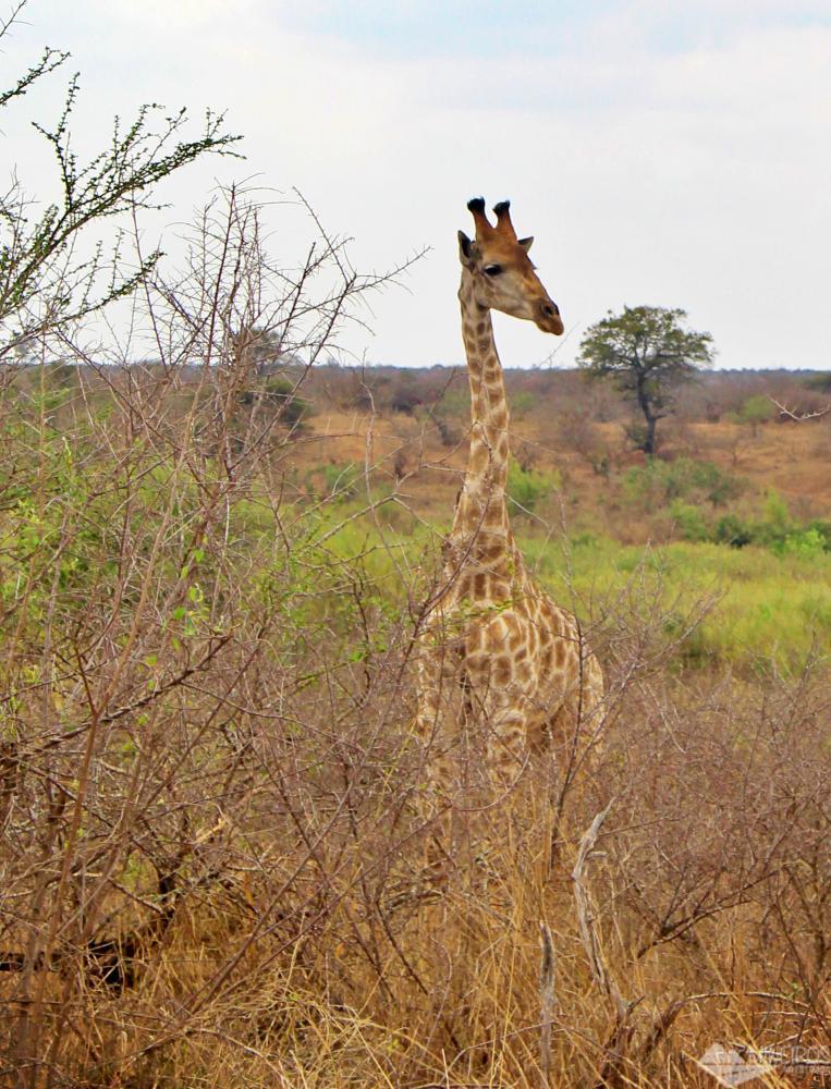 self safari no kruger park