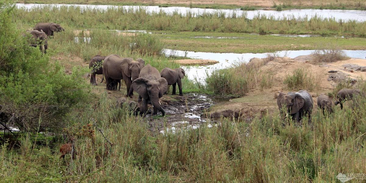 elefantes banho dellama kruger