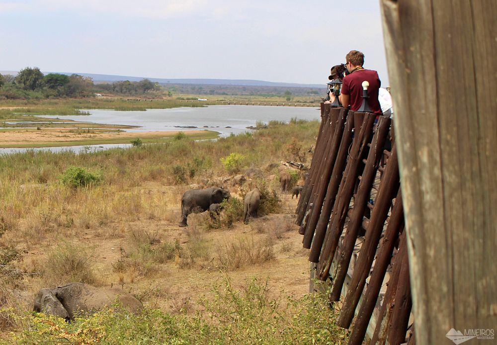 elefantes no almoço no kruger